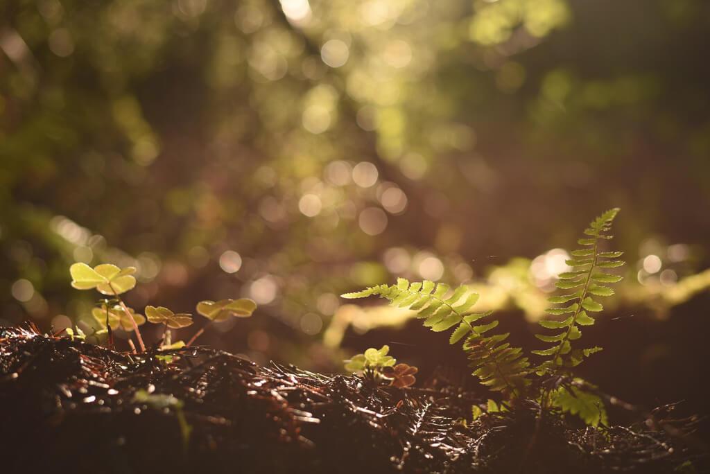 Risicogronden - Wat is er gewijzigd in het bodemdecreet op 29 november 2018